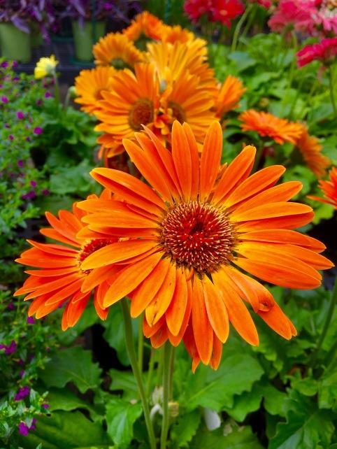 flower2-1